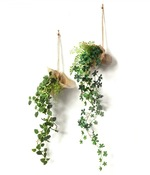 消臭ハンギンググリーン2個セット(B・プミラ/シュガーバイン)